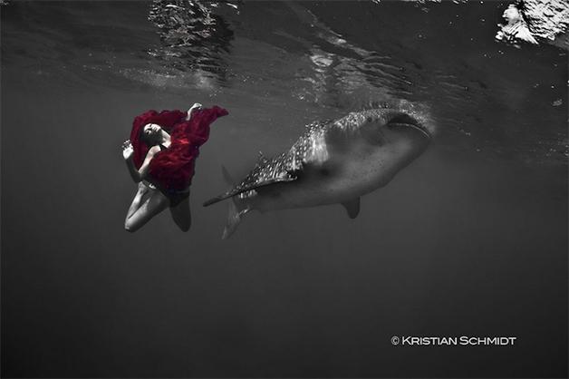 tubarao-baleia-moda-paty-lanfranchi-2