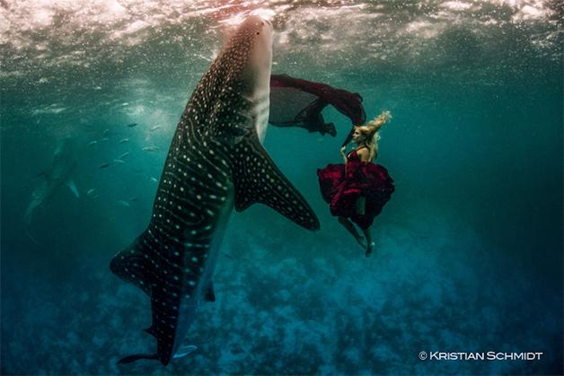 tubaroes-baleia-moda-paty-lanfranchi
