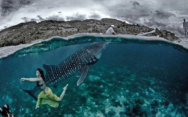tubarao-baleia-moda-paty-lanfranchi-4